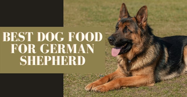 best-dog-food-for-german-shepherd